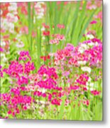 The World Laughs In Flowers - Primula Metal Print