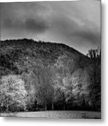 The Yellow Tree In Black And White Metal Print
