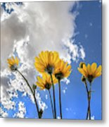 Things Are Looking Up - Wide Format Metal Print