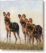 Three African Wild Dogs Metal Print
