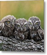 Three Grimly Goblins Metal Print