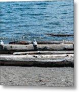 Three Gulls On A Log Metal Print