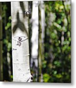 Through The Aspen Forest Metal Print