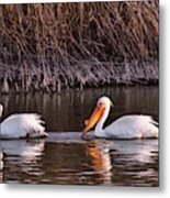 To Pelicans Trolling For Fish Metal Print