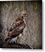 Totem Animal Book Hawk Metal Print