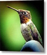 Totem Animal Book Hummingbird Metal Print