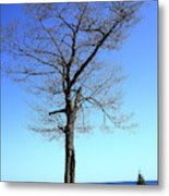 Tree And Great Lake Metal Print