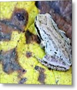 Tree Frog On Yellow Leaf Metal Print