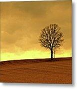 Tree On Hillside At Dusk  Sepia Metal Print