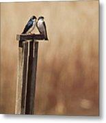 Tree Swallows On Wood Post Metal Print