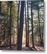 Trees And Shadows  Metal Print