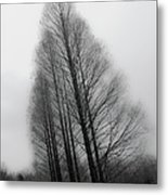 Trees In Winter Without Leaves Metal Print
