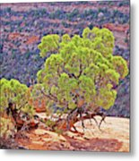 Trees Plateau Valley Colorado National Monument 2871 Metal Print