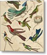 Trochilus - Hummingbirds Metal Print