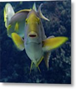 Tropical Fish Poses. Metal Print