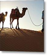 Tuareg Man & Camels, Erg Chebbi, Sahara Metal Print