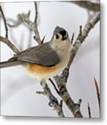 Tufted Titmouse Winter Tranquility Metal Print