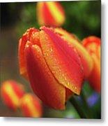 Tulips And Raindrops Metal Print