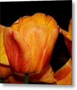 Tulips On A Black Background Metal Print