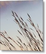 Turkey Foot Grass At Sunset Metal Print