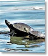 Turtles - Mother And Child Metal Print