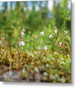 Twinflower Forest Metal Print