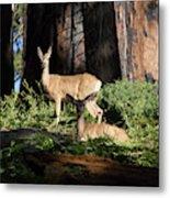 Two Deer Metal Print