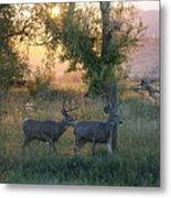 Two Deer Sunset Metal Print