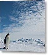 Two Emperor Penguins Metal Print