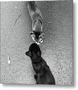 Two Kittens Which Kiss Metal Print
