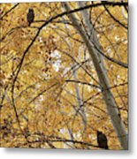 Two Owls In Autumn Tree Metal Print