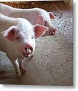 Two Pigs Metal Print