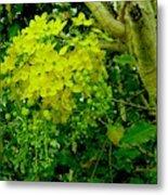 Under The Golden Shower Tree Metal Print