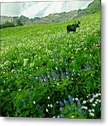 Usa, Utah, Wasatch National Forest, Mt Metal Print