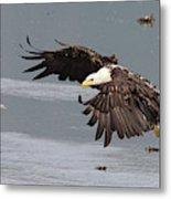 Valdez Eagle One Metal Print