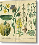 Vegetables And Flowers Of The Garden Metal Print