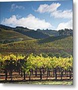 Vineyards Autumn Time In Sonoma Valley Metal Print