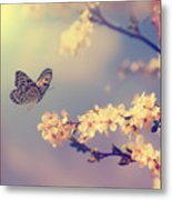Vintage Butterfly And Cherry Tree Metal Print