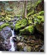 Vivid Green In The Black Forest Metal Print