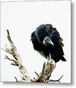 Vulture Perched On Tree Metal Print