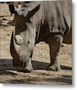 Walking Rhino With One Large Horn And One Small Horn Metal Print