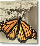 Wandering Migrant Butterfly Metal Print