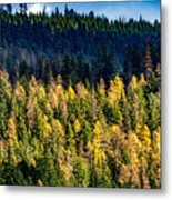 Washington - Gifford Pinchot National Forest Metal Print