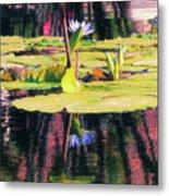 Water Lily 12 Metal Print