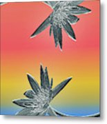 Water Lily Duo Two Metal Print