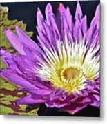 Water Lily On The Pond Metal Print