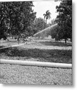 Water Spray Orchard Metal Print