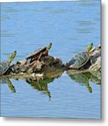 Western Painted Turtles Metal Print