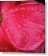 Wet Rose Petal Metal Print