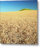 Wheat And Mounds Metal Print